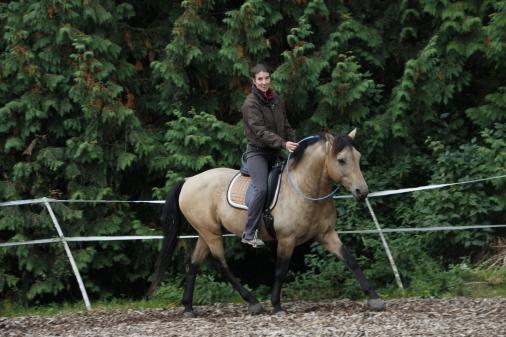 Reitkurse und Therapie auf Curly Horses